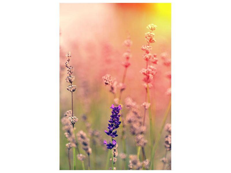 Leinwandbild Der Lavendel