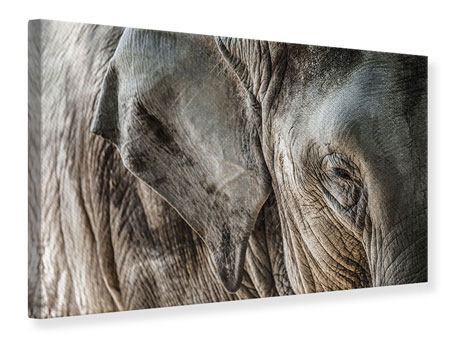 Leinwandbild Close Up Elefant