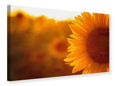 Leinwandbild Macro-Sonnenblume