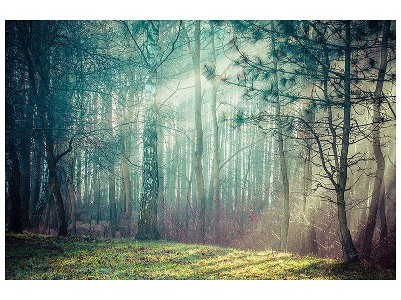Leinwandbild Pinienwald