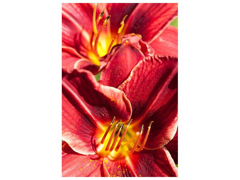 Leinwandbild Rotes Lilienduo