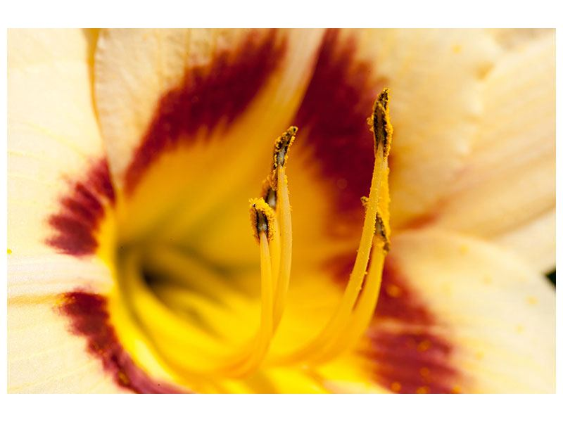 Leinwandbild Riesenlilie