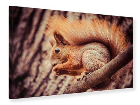 Leinwandbild Eichhörnchen