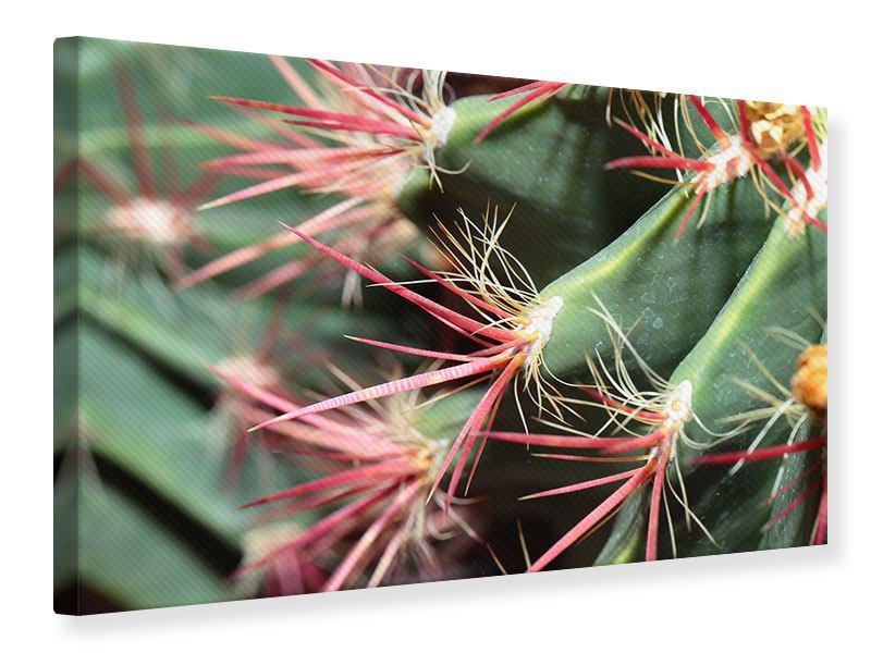 Leinwandbild Die Kaktusblüte