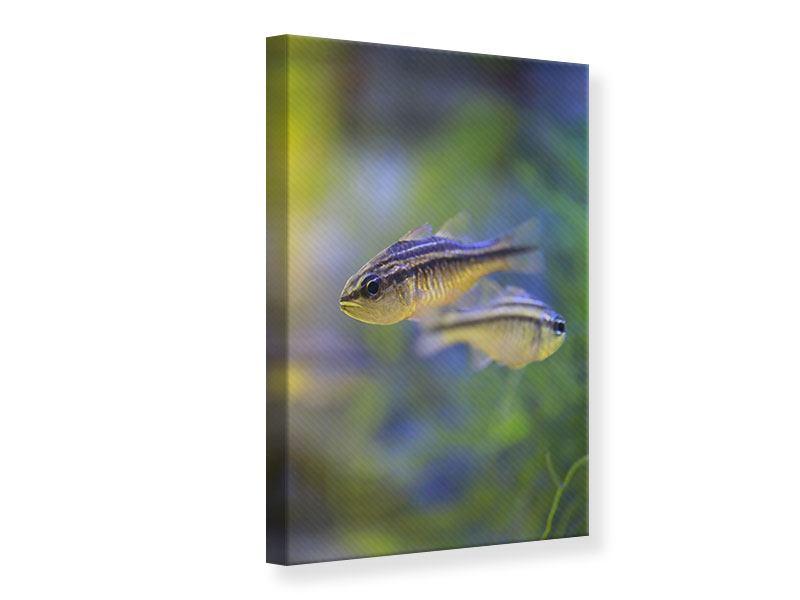 Leinwandbild Fischpaar