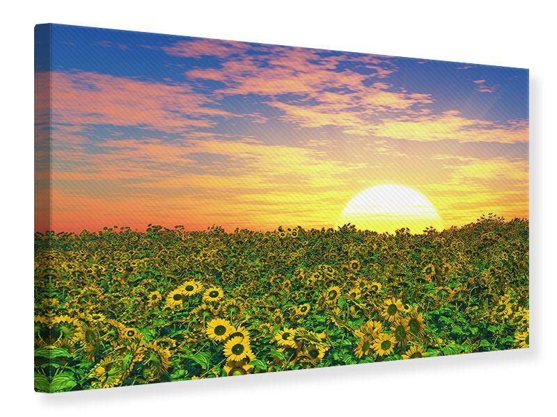 Leinwandbild Blumenpanorama bei Sonnenuntergang