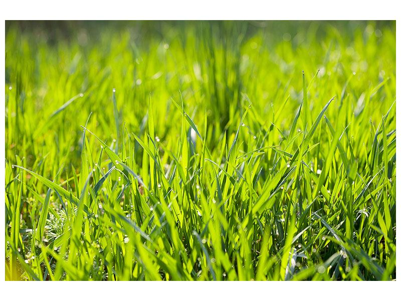 Leinwandbild Gras im Morgentau