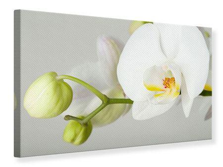 Leinwandbild Riesenorchidee