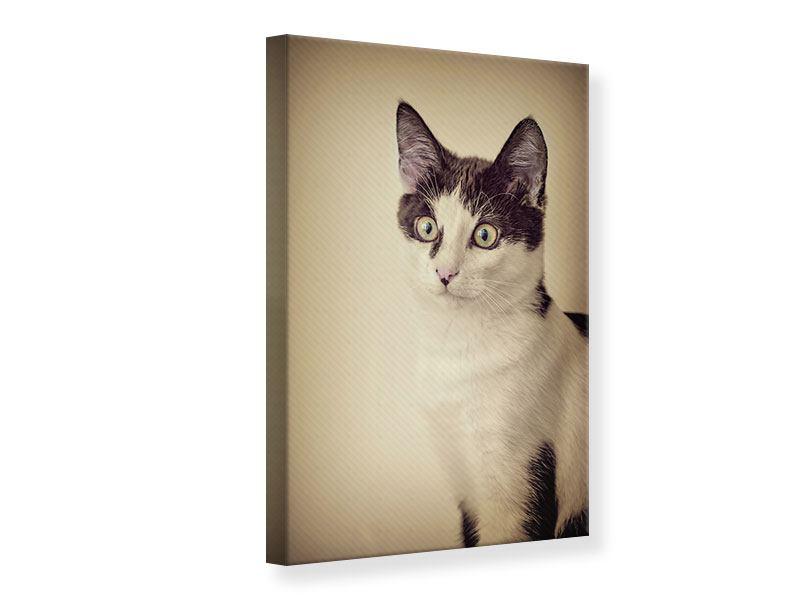 Leinwandbild Katze