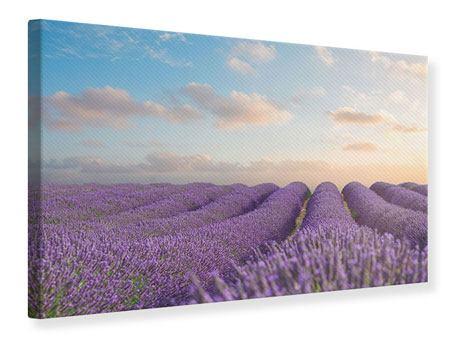 Leinwandbild Das blühende Lavendelfeld