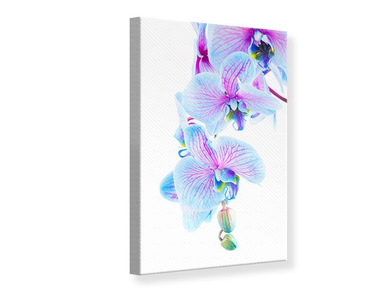 Leinwandbild Orchideen-Schmetterling