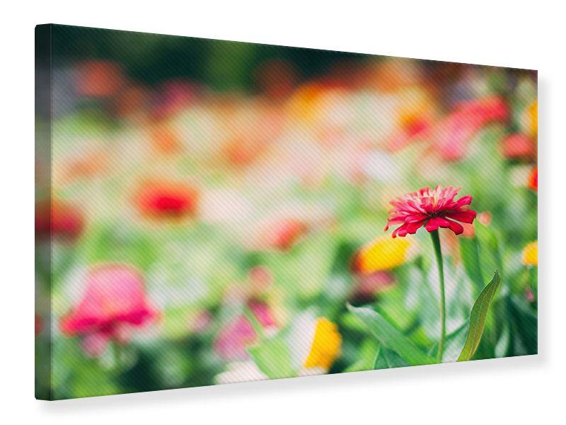 Leinwandbild Im Blumengarten