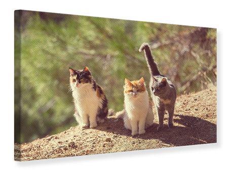 Leinwandbild Katzen im Garten