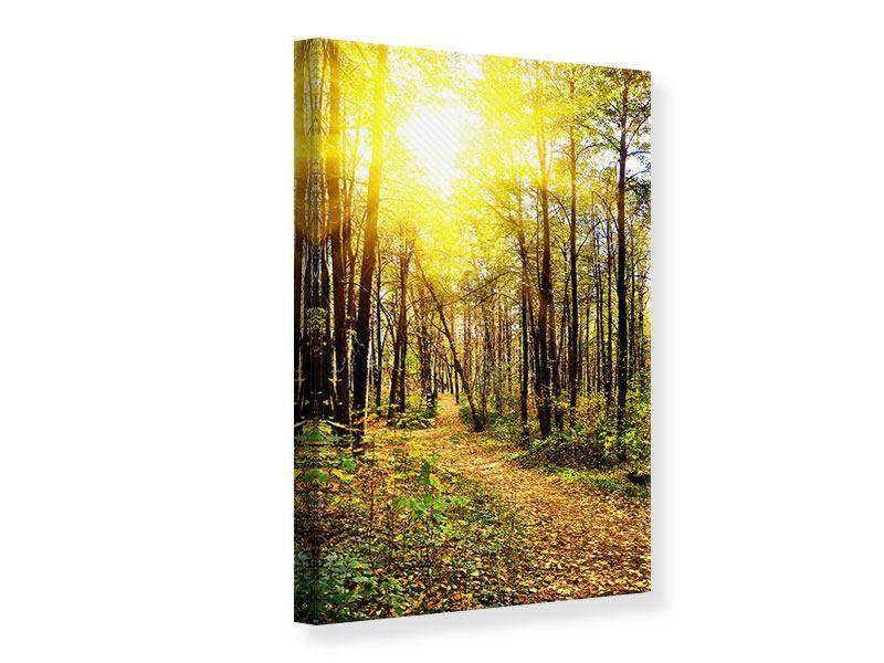 Leinwandbild Waldspaziergang in der Herbstsonne