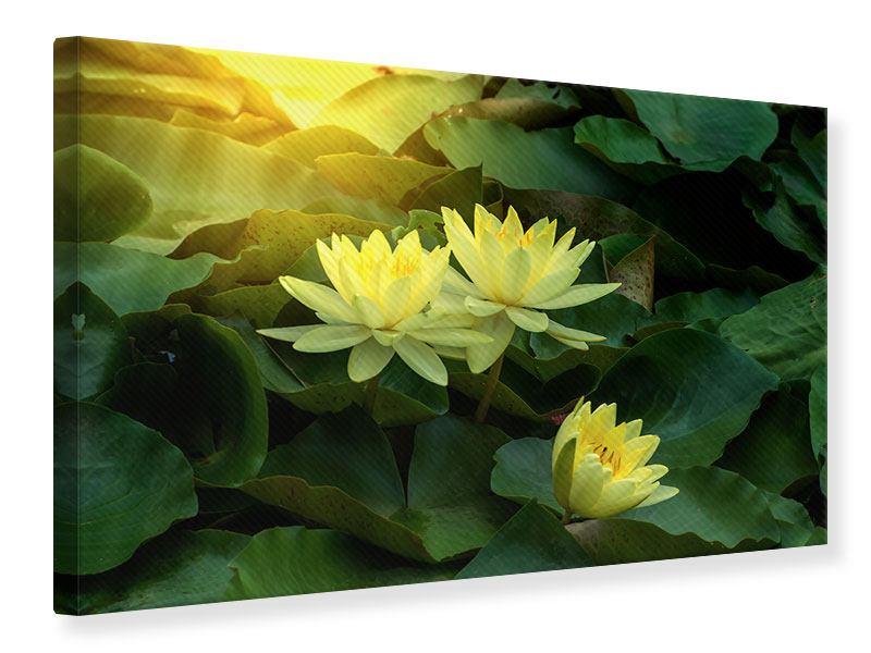 Leinwandbild Wilde Lotus