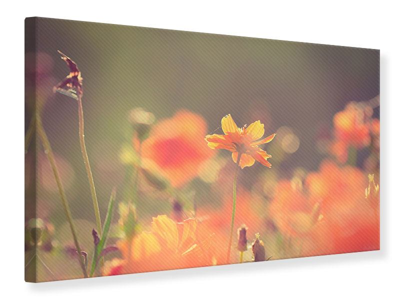 Leinwandbild Blütenpracht
