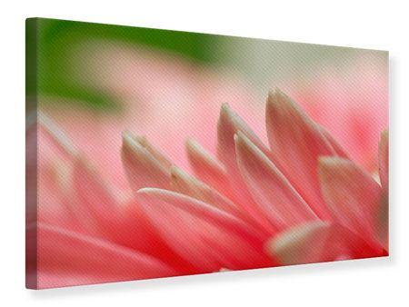 Leinwandbild Close Up einer Blüte
