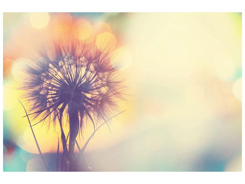 Leinwandbild Die Pusteblume im Licht