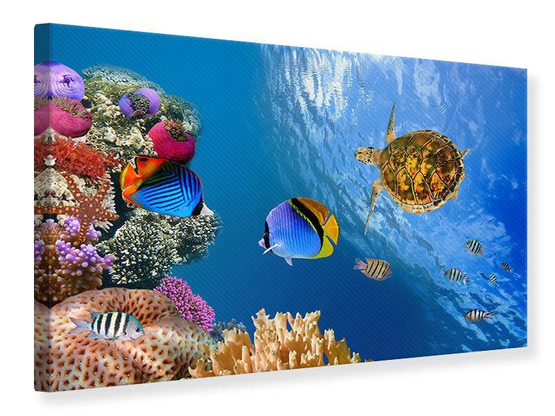 Leinwandbild Fisch im Wasser