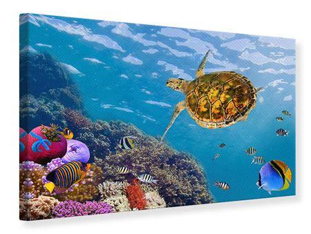 Leinwandbild Die Wasserschildkröte