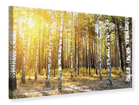 Leinwandbild Birkenwald