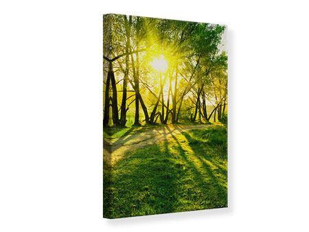 Leinwandbild Waldweg im Sonnenlicht