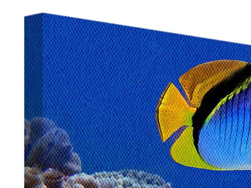 Leinwandbild Welt der Fische
