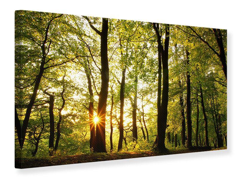 Leinwandbild Sonnenuntergang zwischen den Bäumen