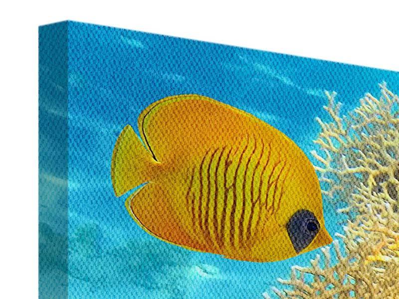 Leinwandbild Fischreichtum