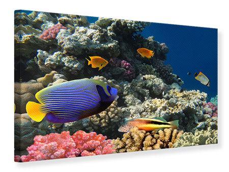 Leinwandbild Das Aquarium