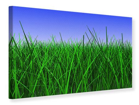 Leinwandbild Im Gras