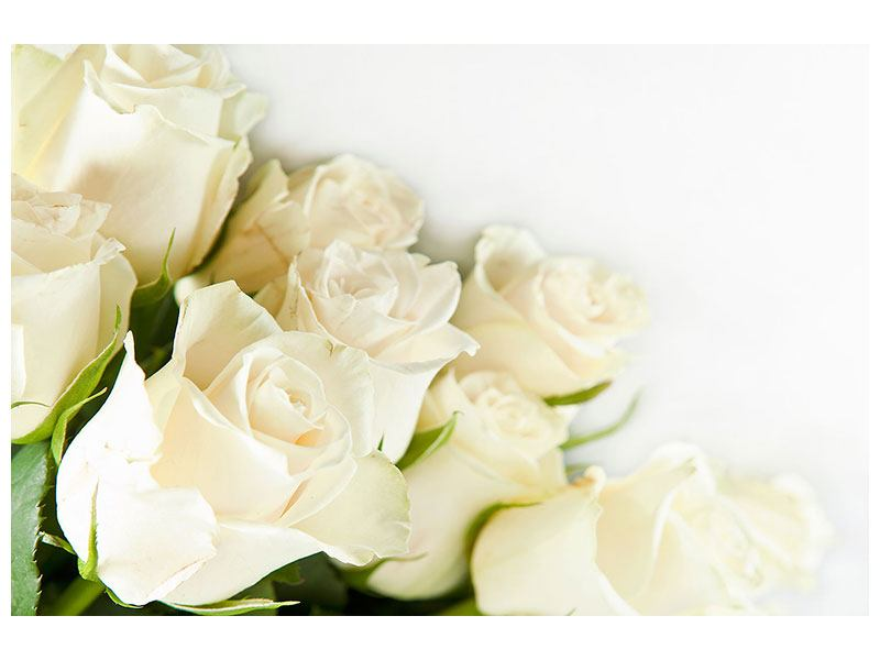 Leinwandbild Weisse Rosen