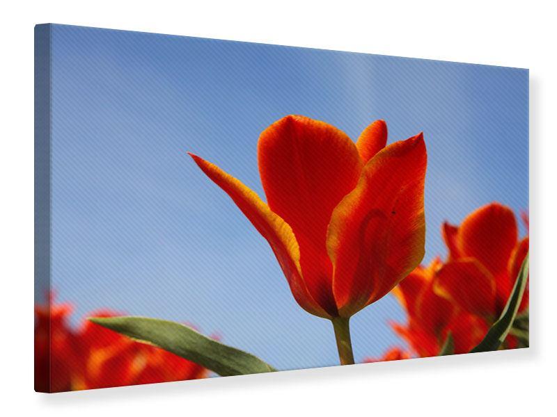 Leinwandbild Rote Tulpen in XXL