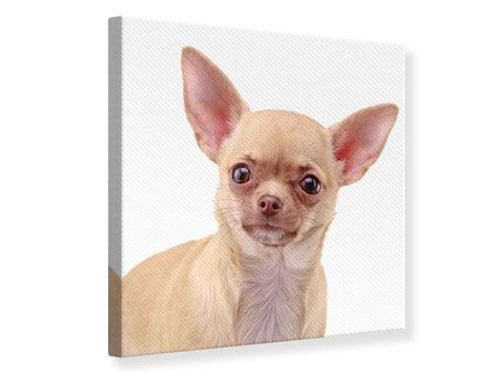 Leinwandbild Chihuahua