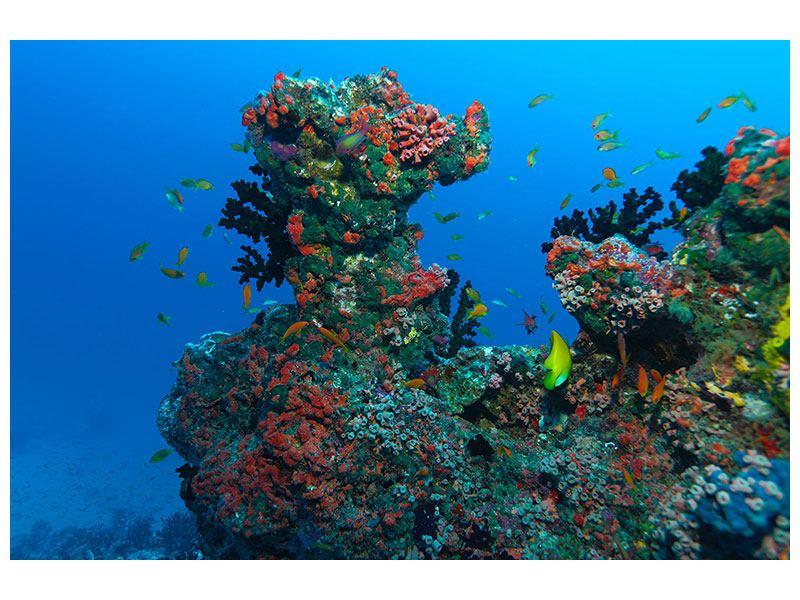 Leinwandbild Die Welt der Fische