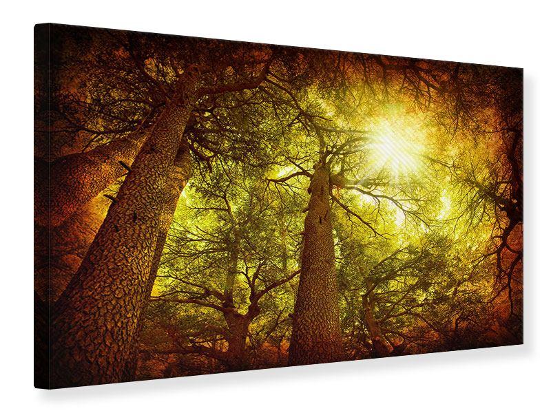 Leinwandbild Cedar Baum