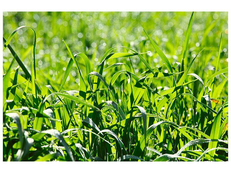 Leinwandbild Sonniges Gras