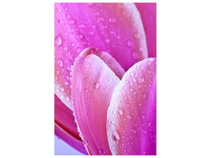 Leinwandbild Close Up Tulpe