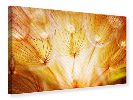 Leinwandbild Close Up Pusteblume im Licht