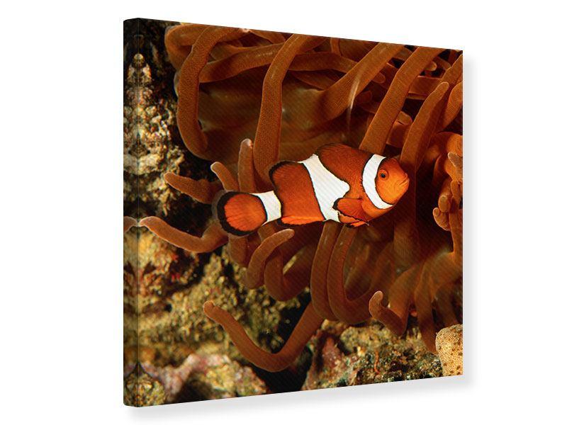 Leinwandbild Nemo