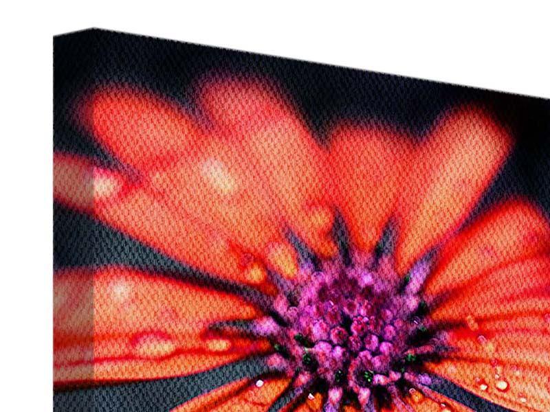 Leinwandbild Colored Gänseblümchen