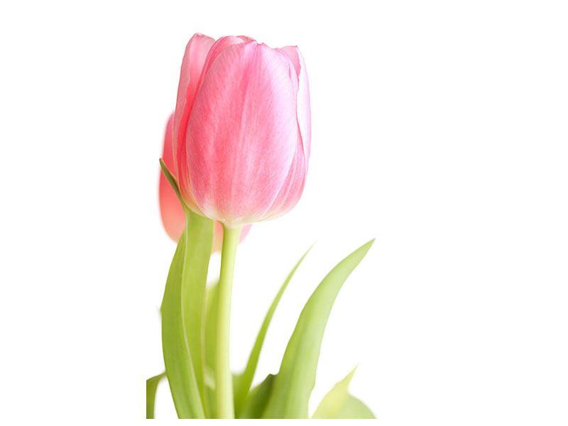 Leinwandbild XXL Tulpe