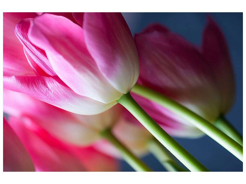 Leinwandbild Makro Tulpen
