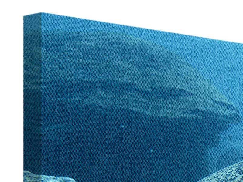 Leinwandbild Die Meeresschildkröte