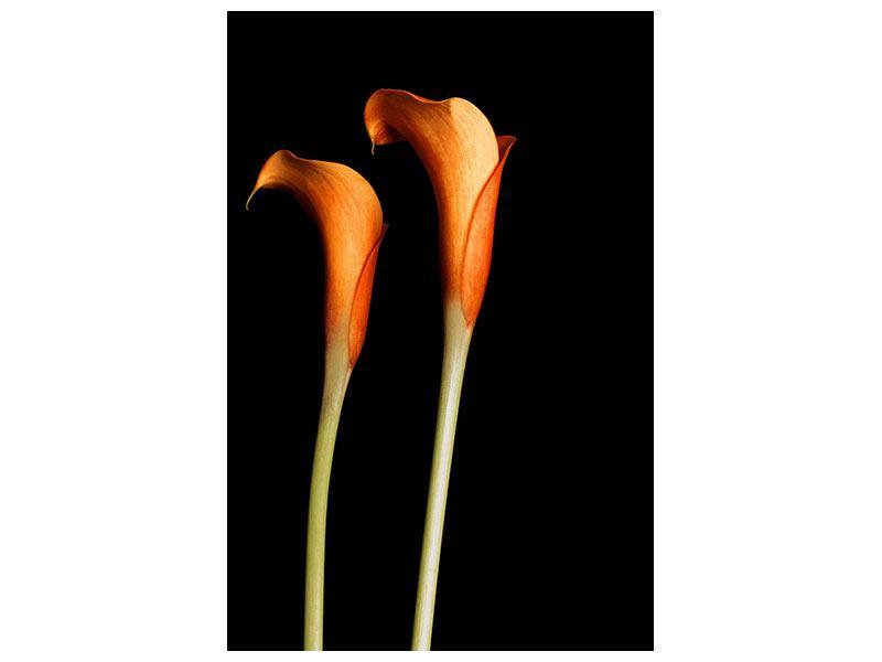 Leinwandbild Goldige Calla