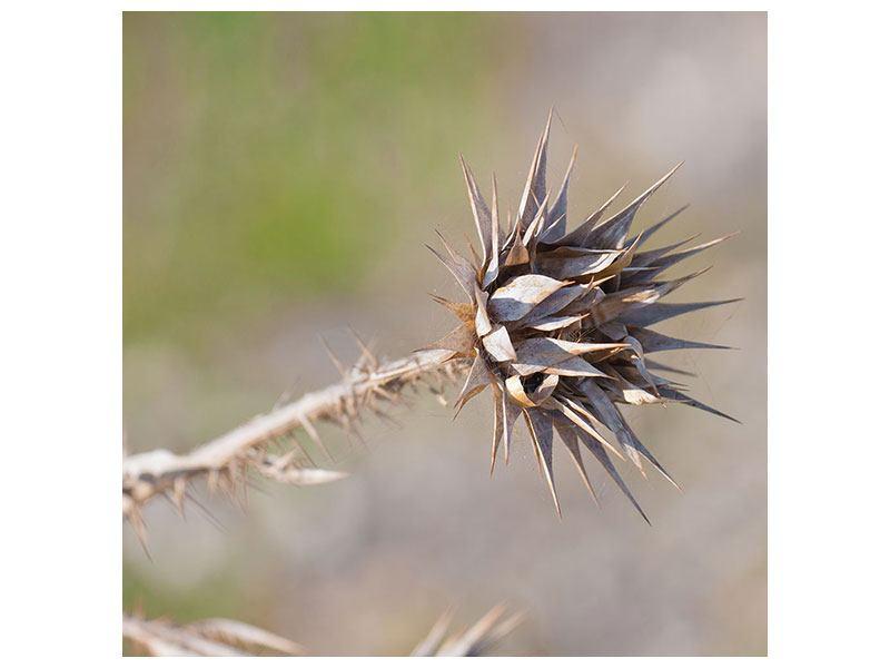 Leinwandbild Die Wüstenblume