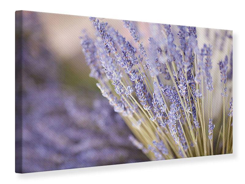 Leinwandbild Lavendel XXL