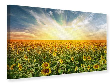 Leinwandbild Ein Feld voller Sonnenblumen