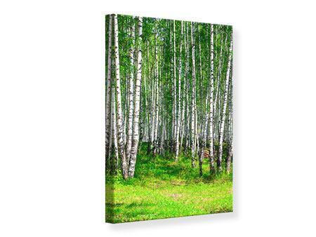 Leinwandbild Der Birkenwald im Sommer
