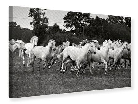 Leinwandbild Die Mustang Herde